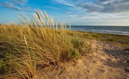Plage de Vendée dans les Pays-de-la-Loire Camping Qualité