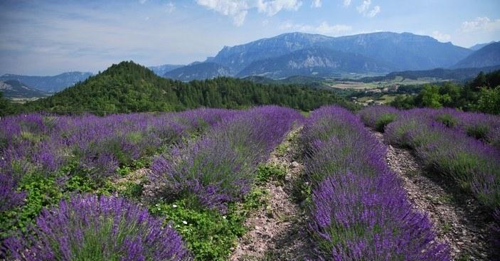 Région Rhône-Alpes Camping Qualité - opt_hir_113
