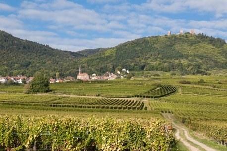 Région Alsace Camping Qualité - Vignobles alsaciens