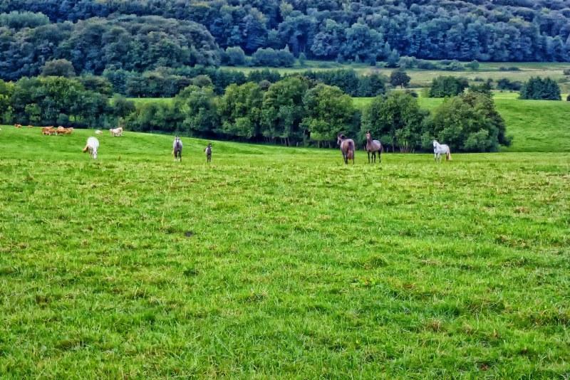Prairie et campagne des Ardennes Camping Qualité Grand-Est