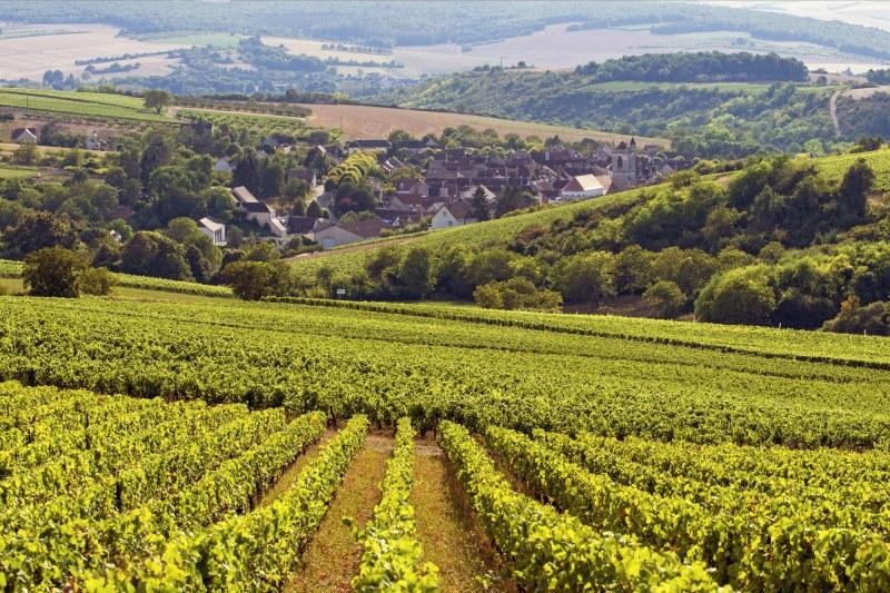 Vignobles à Irancy dans l'Yonne Camping Qualité Bourgogne-Franche-Comté