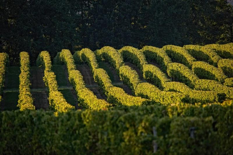 Vignes de Cassaigne dans le Gers Camping Qualité Gers