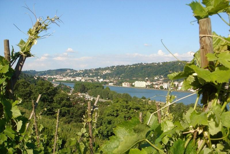 Pilat Rhodanien (69) - Vignoble des Côtes du Rhône septentrionales Camping Qualité Auvergne-Rhône-Alpes