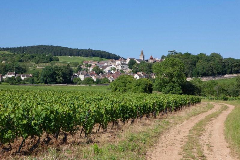 Vignoble dans le département Côtes d'Or en région Bourgogne-Franche-Comté Camping Qualité