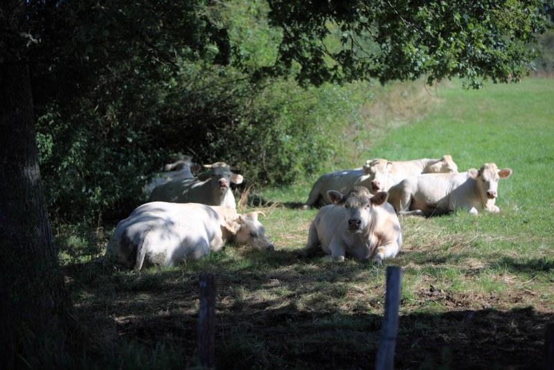 Département Côtes d'Or Région Bourgogne-Franche-Comté Camping Qualité