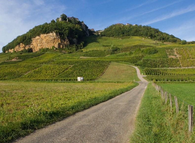 Vignes de Château-Chalon dans le Jura Camping Qualité