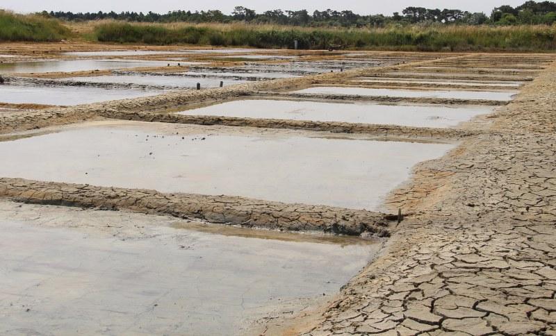 Marais salants sur l'Île d'Oléron Camping Qualité Charente-Maritime