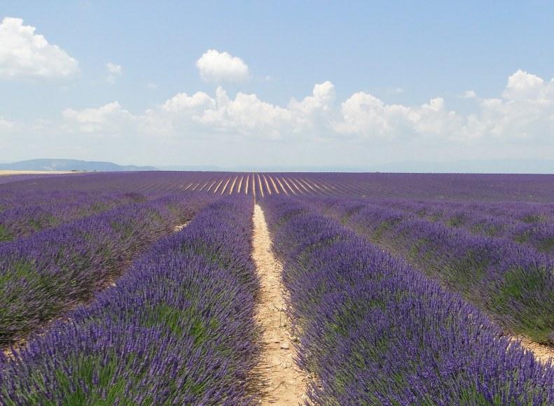 Plateau de Valensole dans le Parc du Verdon - Camping Qualité Provence-Alpes-Côtes d'Azur