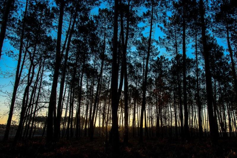 Forêt en Gironde Camping Qualité Nouvelle Aquitaine