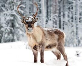 Faune sauvage de Savoie en hiver | Camping Qualité