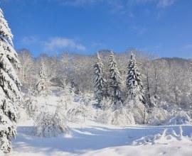 Forêt des Vosges en hiver | Camping Qualité