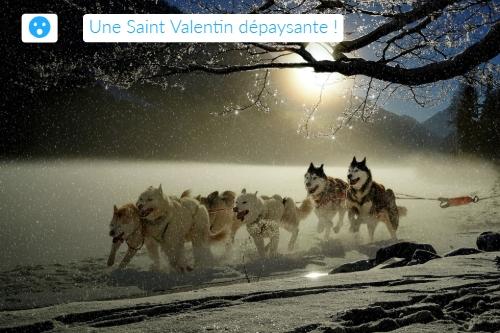 idée cadeau Saint-Valentin : chien de traîneaux dans les Alpes ou les Pyrénées depuis votre camping labellisé Camping qualité