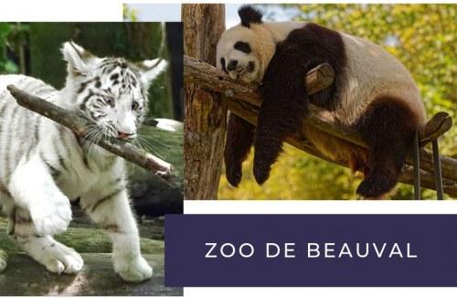 Incontournable depuis votre camping au zoo de beauval