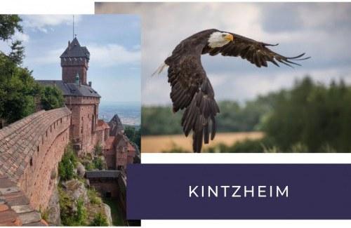 Incontournable depuis votre camping à kintzheim
